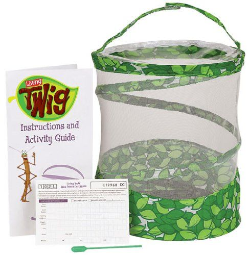 Living Twig Stick Insect Kit sold by Gifts for Little Hands