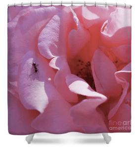 Pink rose art print shower curtain