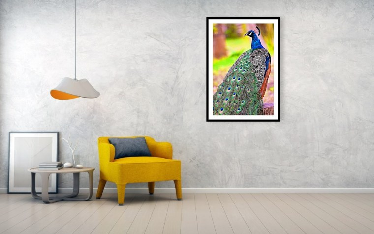 Majestic peacock framed art print and mounted on the wall
