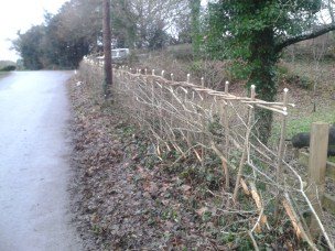 Hedgelaying, 2017