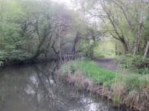 Afton Marsh