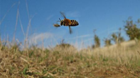newchurch bee