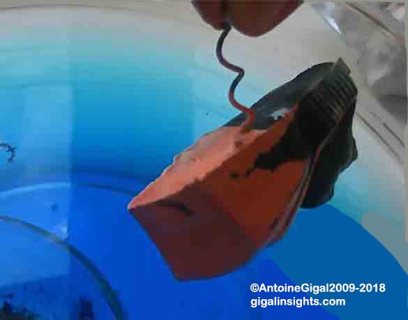 antoine_gigal_electroplating_experiment