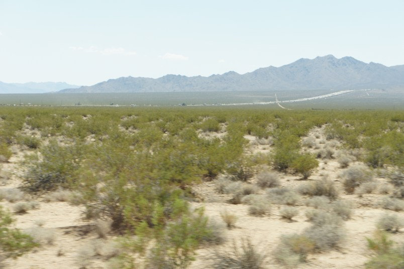 The road to Ivanpah paved by tumble weed