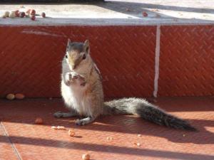 Einer unser täglicher Besucher auf dem Balkon in Kodaikanal. Die Kinder haben die Tierlein fleissing gefüttert!