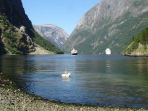 Die Fjorde haben irgend etwas an sich das viele Menschen anzieht...