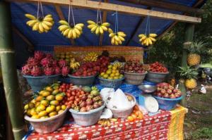Die Früchte werden wir vermissen...