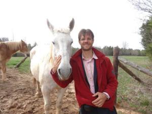 Eines der Arbeitstiere... Kräftige Pferde...