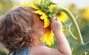 girl-with-face-in-sunflower