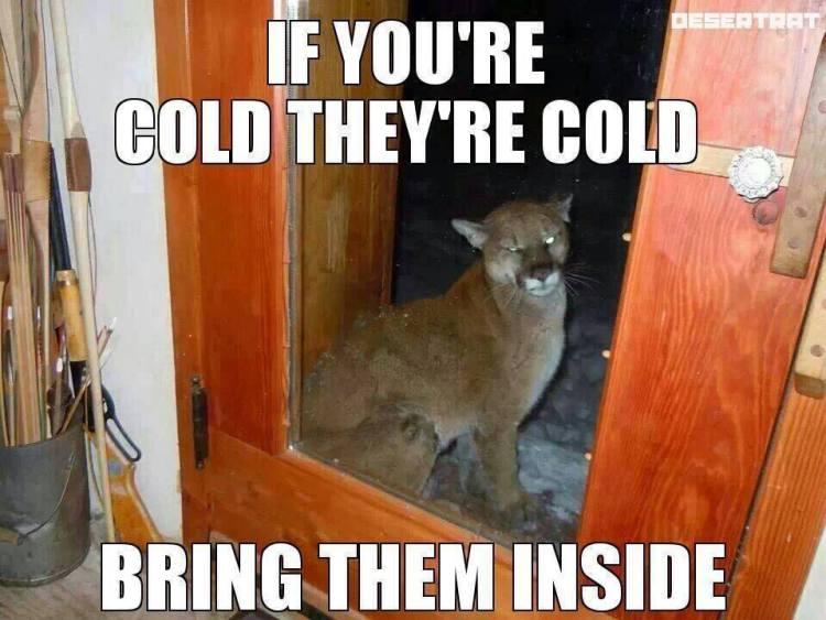 bring-them-inside