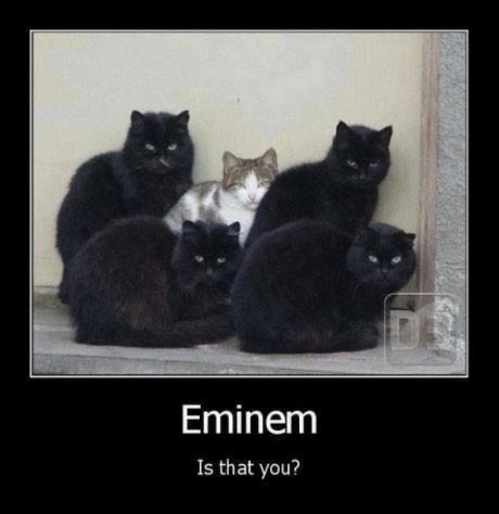 eminem-cat