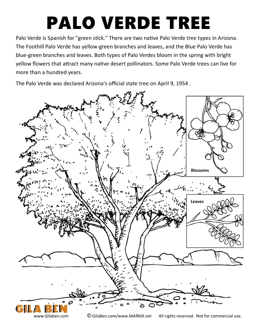 arizona state tree palo verde coloring page