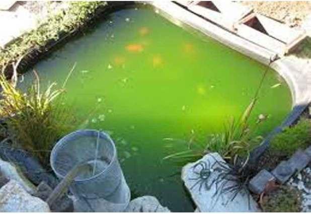 air hijau