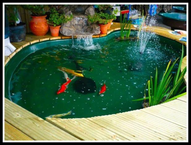 cat kolam