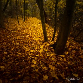 Autumn Fantasy : The Yellow Leaves Road (Photo : Gilderic)
