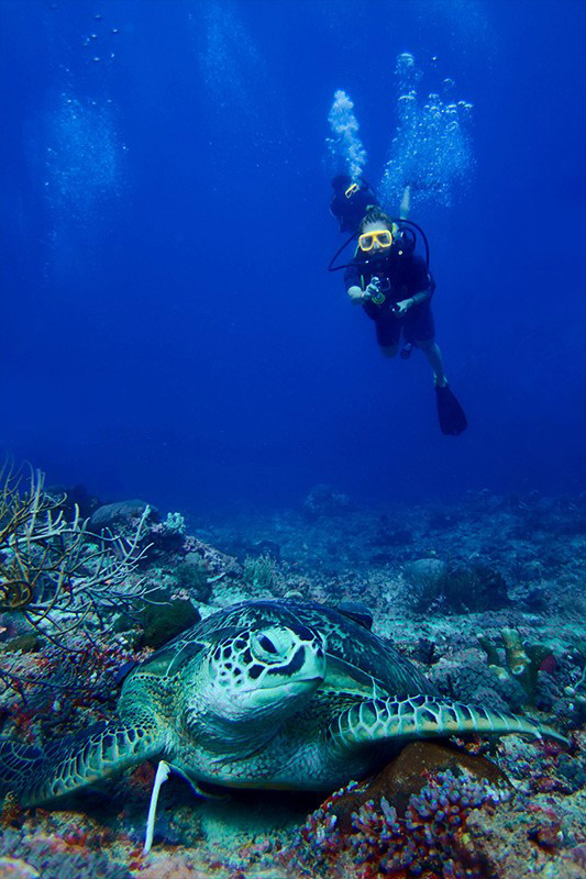 gili-divers-dive-trips