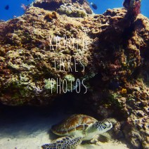 gili-divers-gallery-1