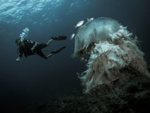 gili-divers-gallery-10