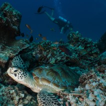 gili-divers-gallery-3