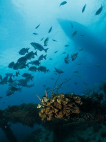 gili-divers-gallery-4
