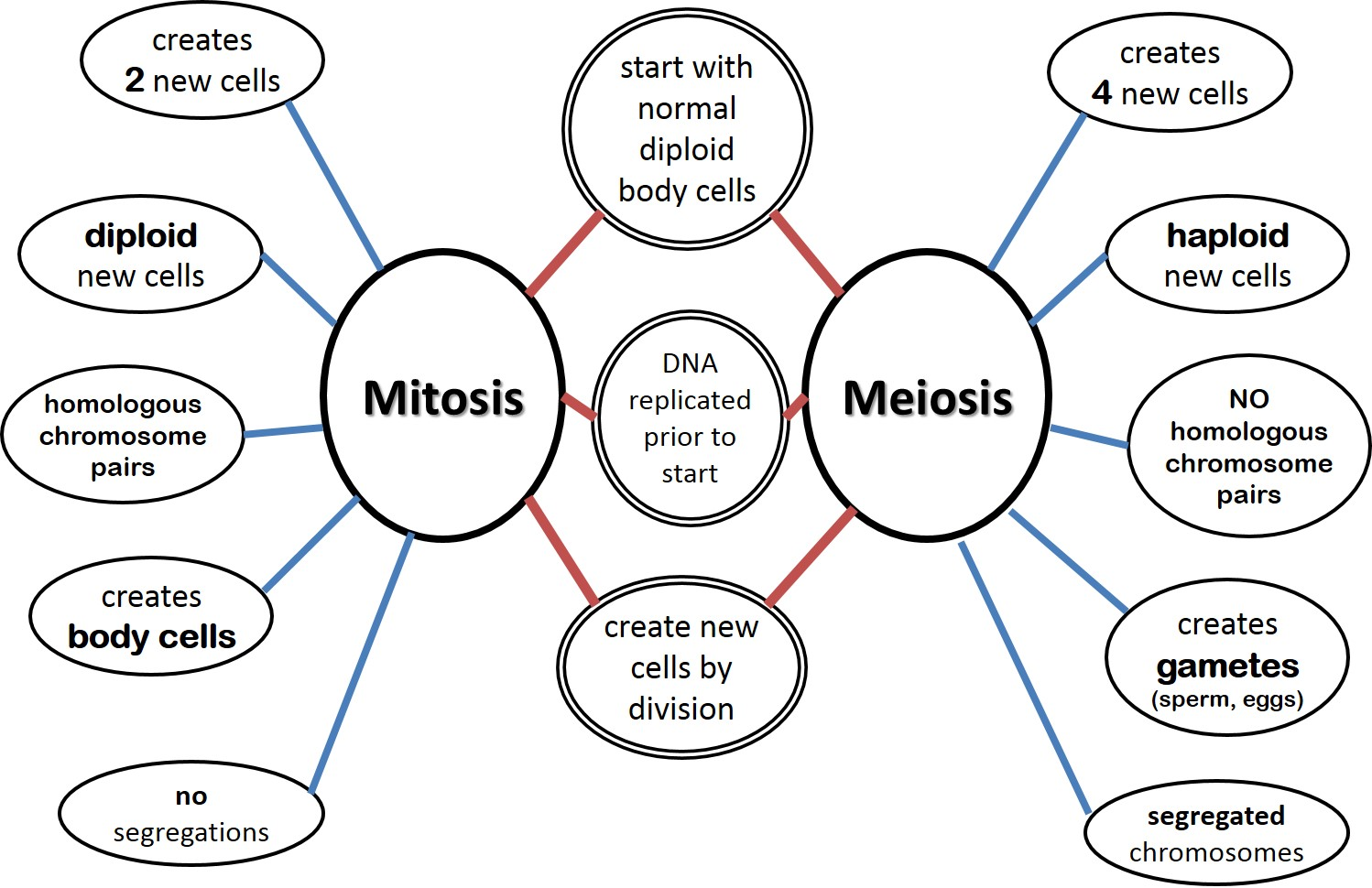 Cell Division Mitosis Worksheet Diagram