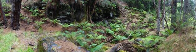 A Soggy Walk in Waikamoi