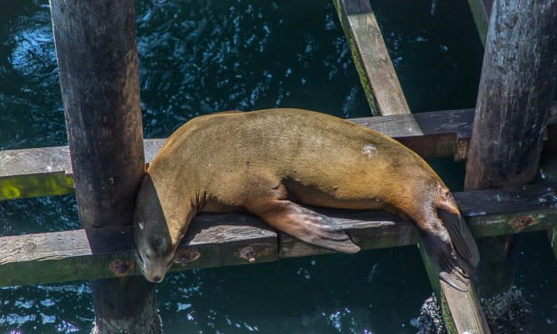 Santa Cruz Wharf & Elephant Seal Beach in San Simeon