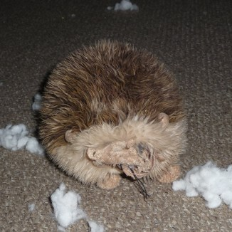 The remains of the hedgehog!