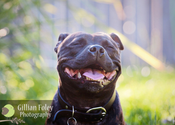 Gillian Foley Photography - Pet Photography | Gypsy