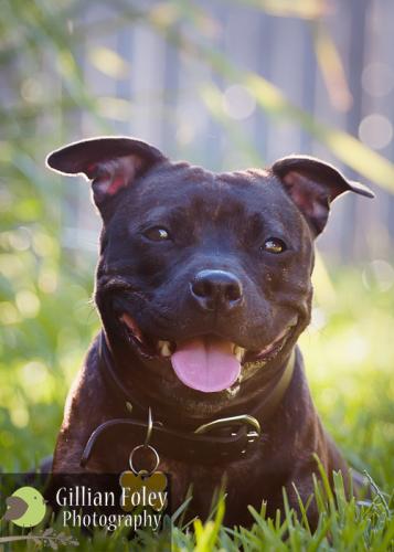 Gillian Foley Photography | Impromptu Doggy Shoot