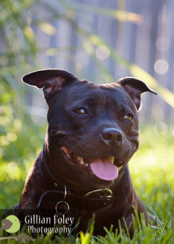 Gillian Foley Photography - Impromptu Doggy Shoot | Pet Photography
