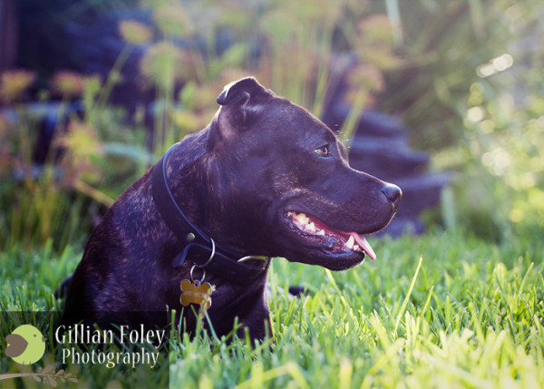 Gillian Foley Photography - Impromptu Doggy Shoot | Pet Photography