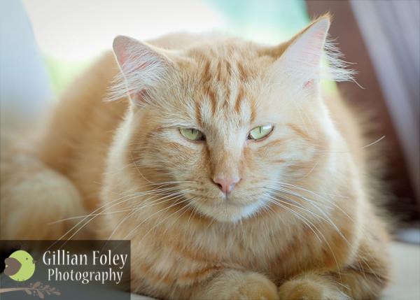 Gillian Foley Photography - The smallest feline is a masterpiece