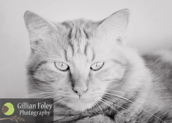 Gillian Foley Photography - The smallest feline is a masterpiece