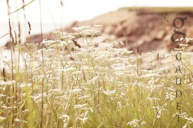 wildflowersWM