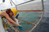 Kristin Hannan- NOAA-NMFS