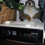 groundhog day clock