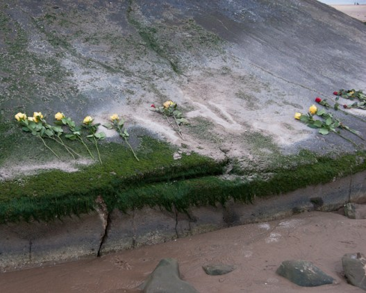 Yellow roses, Talacre Lighthouse