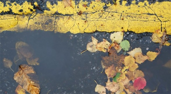 Leaves and yellow lines