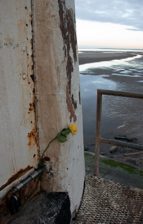 Yellow rose, Talacre Lighthouse