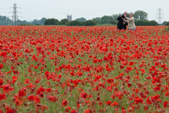 Photographing the poppy fields