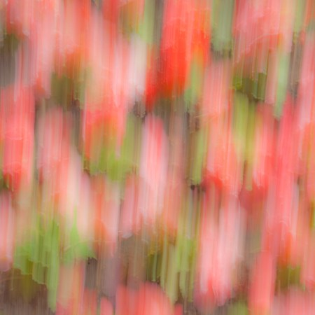 Summer colour, intentional camera movement