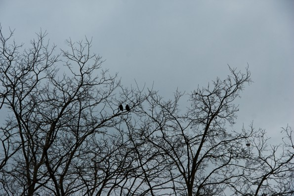 Two birds in tree branches