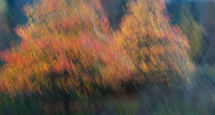 Autumn colours, impression, ICM