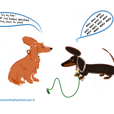the longest dachshund part 4