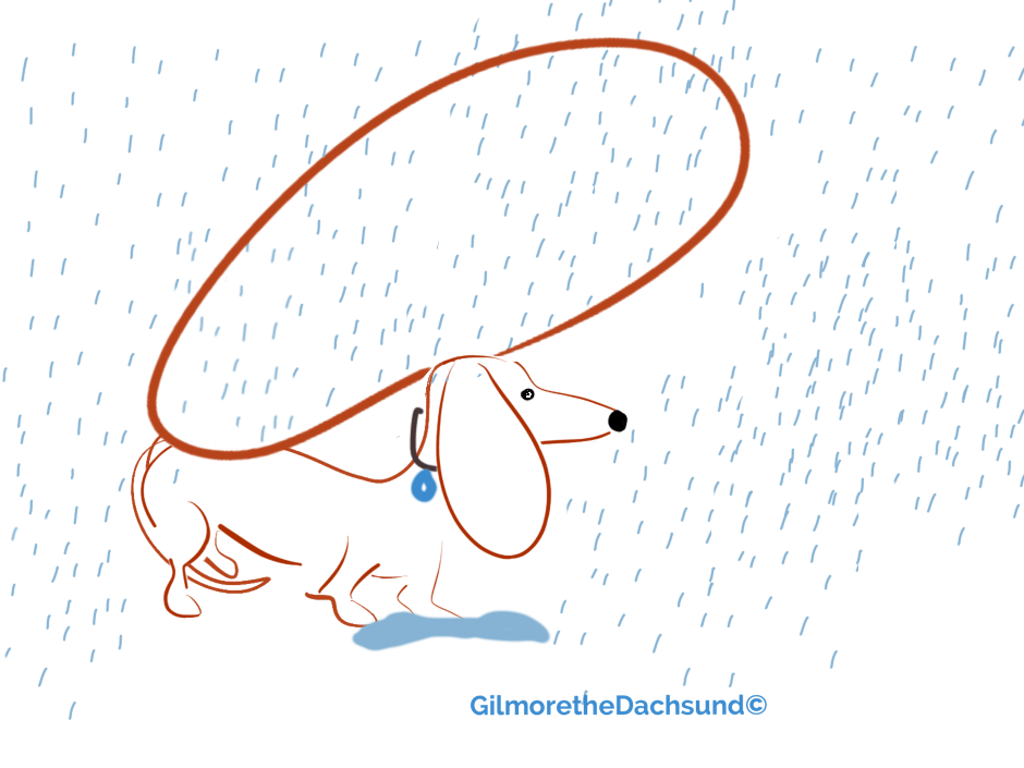 when mum forgets her umbrella…. (make sure you click on this it's a movie)