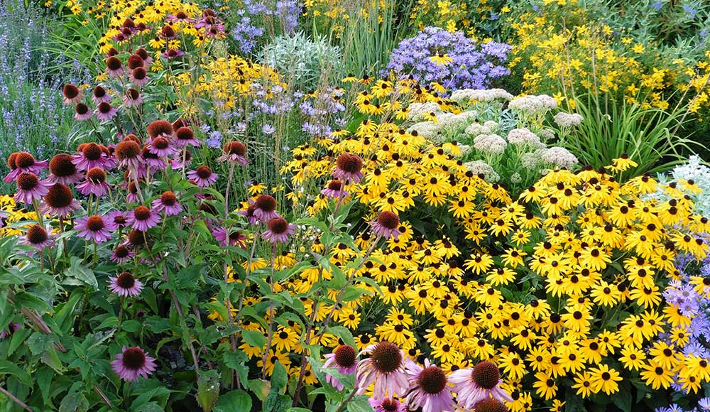 Perennial Flowers That Bloom All Summer Gilmour