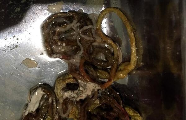 Рис. 10. Инородные тела из тонкого отдела кишечника кота – нитки с гельминтами.