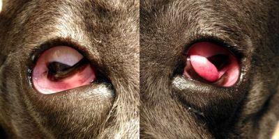 Офтальмология для животных в Санкт-Петербурге. Офтальмоскопия, промывание носослёзных каналов, измерение внутриглазного давления и другие офтальмологические услуги.