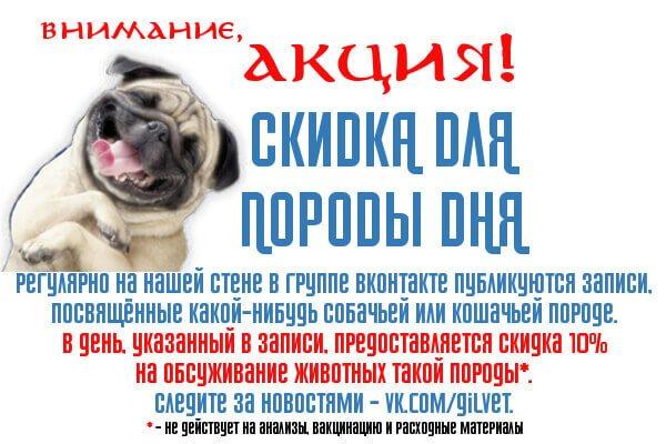 10%-ая скидка для породы дня из группы ВКонтакте ветеринарной клиники доктора Гиль.